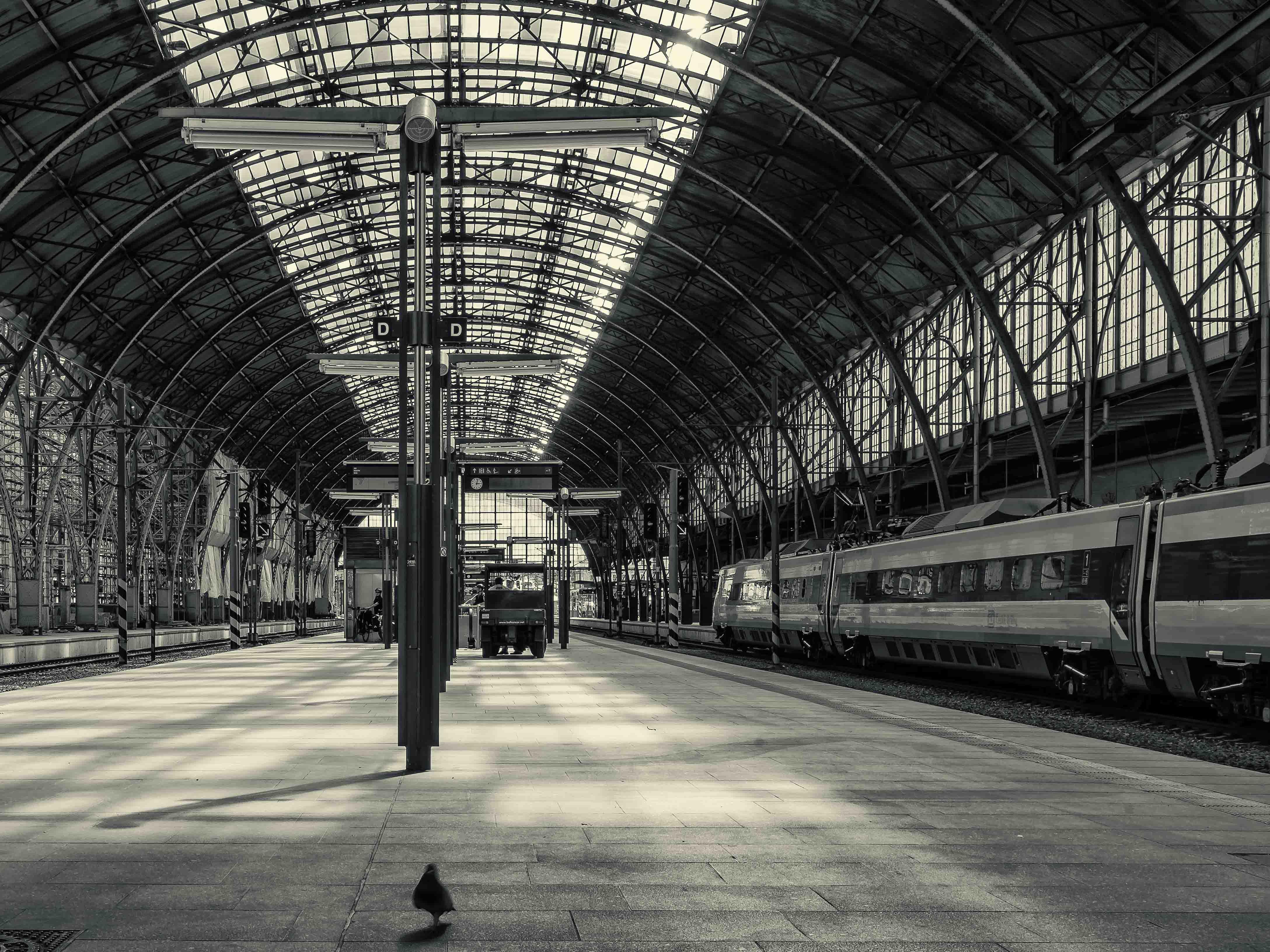 Černobílá dokumentární fotografie holubu na nástupišti hlavního nádraží v Praze od Jan Stojan Photography ©